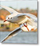 Seagulls In The Air Metal Print