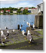 seagulls near a pond in the center of Reykjavik Metal Print