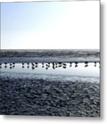 Seagulls On A Sandbar Metal Print