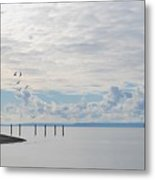 Seagulls Over Admiralty Inlet 2 Metal Print
