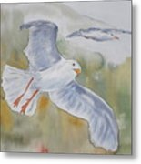 Seagulls Over Glacier Bay Metal Print