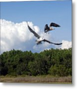 Seagulls Over Marsh Metal Print