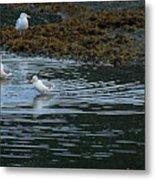 Seagulls-signed-#9360 Metal Print