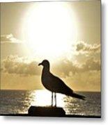 Seagull's Sunrise Silhouette Metal Print