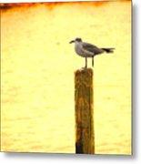 Seagulls Sunset Metal Print