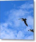Seagulls2 Metal Print