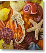 Seahorse And Assorted Sea Shells Metal Print