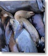 Seal Buddies Metal Print