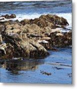 Seal Island Metal Print