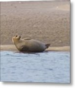 Seal Relaxing On Cupsogue Beach Metal Print