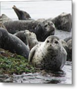 Seal Rock Metal Print