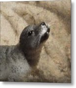 Seal With A Kiss Metal Print