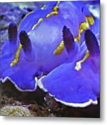Sealife Underwater Snails Metal Print