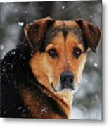 Search And Rescue Dog Metal Print