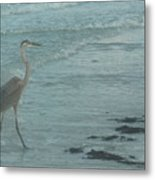 Searching For Food Metal Print