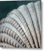 Seashell Designs Metal Print