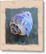 Seashell IIi Grunge With Border Metal Print