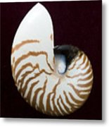 Seashell On Black Background Metal Print
