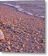 Seashell On The Beach, Lovers Key State Metal Print