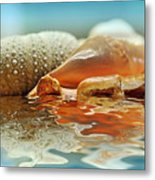 Seashell Reflections On Water Metal Print
