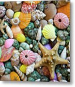 Seashells 3 Metal Print