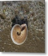 Seashells By The Sea Metal Print