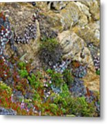Seaside Cliff Garden In Point Lobos State Reserve Near Monterey-california  Metal Print