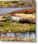 Seaside Marsh Metal Print