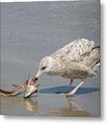 Seaside Snack - 4  Metal Print