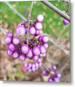 Seasonal Charm Metal Print
