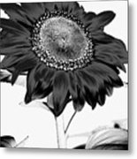 Seattle Sunflower Bw Invert - Stronger Metal Print