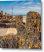 Seaweed Covered Metal Print