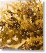 Seaweed In The Sand Metal Print