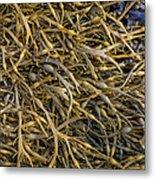 Seaweed On The Coast Of Iceland Metal Print
