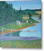 Second Peninsula Cows Metal Print