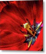 Secret Of The Red Tulip Metal Print