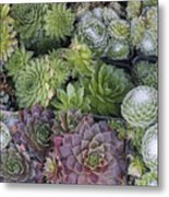 Sedum Plants Used As Green Roof Metal Print