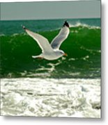 See Gull Metal Print