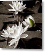 See Roses In The Pond Metal Print