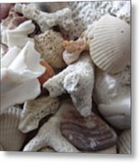 See Sea Shells Fom The Sea Metal Print
