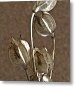Seed Pods Macro Metal Print