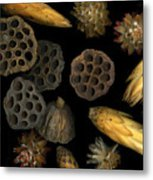 Seeds And Pods Metal Print