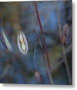 Seeds In A Pod Dark Metal Print