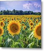 Seeds Of Hope Metal Print
