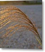 Seeds Of Sunlight Metal Print