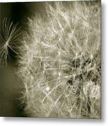 Seedy Dandelion Metal Print