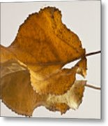 Seeing Double Autumn Leaf  Metal Print