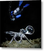Seeing Eye To Eye Metal Print
