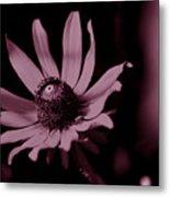 Seeing Life Through Rose-colored Glasses Metal Print