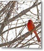 Seeing Red - Northern Cardinal - Cardinalis Cardinalis Metal Print